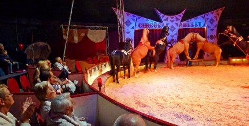 Die Tiger Sind Los Unser Besuch Beim Circus Belly Pflegeheim